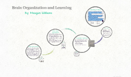 Brain Organization and Learning