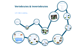 Copy of Vertebrates & Invertebrates
