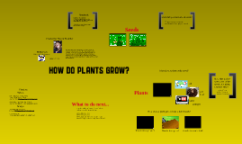 Life Cycle of Plants