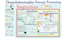 AP Bio- Cellular Respiration