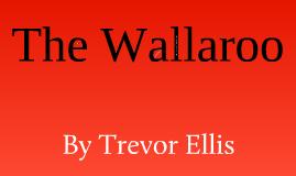 The Wallaroo