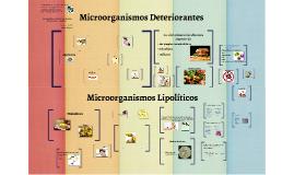 Copy of Microorganismos lipolíticos