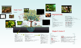 8--Plants