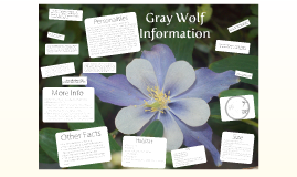 Gray Wolf Information