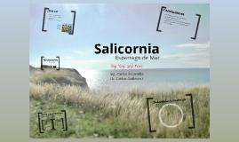 Copy of Salicornia