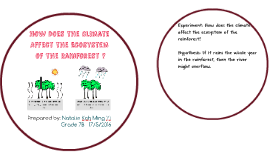 How Does the Climate Affect the Ecosystem of the Rainforest