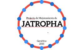 Mejoramiento de Jatropha