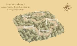 Especies usadas en la conservación de suelos entre los 2000