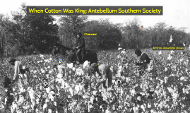 When Cotton Was King: Antebellum Southern Society