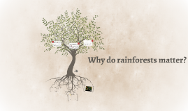 Why do rainforests matter?