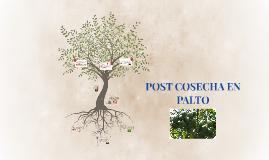 Copy of Copy of POST COSECHA EN PALTO