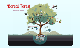 Boreal Forest- Final Summative