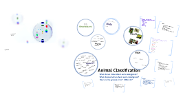 Copy of Animal Classifications