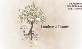 Lumière et Plantes