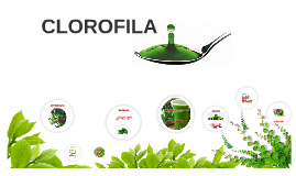 Copy of CLOROFILA