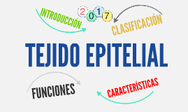 Copy of TEJIDO EPITELIAL