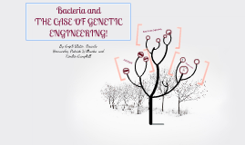 Bacteria and genetic Engineering