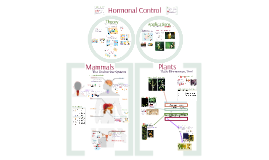 Communication 2:  Hormonal Control
