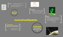 Asexual v. Sexual Reproduction