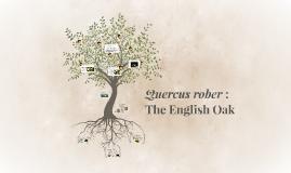 Quercus rober :