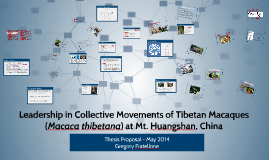 Female Leadership in Collective Movements of Tibetan Macaque