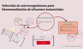 Selección de microorganismos para biorremediación de efluent
