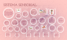 Copy of SISTEMA SENSORIAL