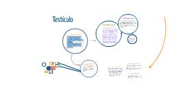 Copy of Copy of Testículo
