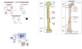 B.2 Anatomie Bewegungsapparat (BiVo 2017)