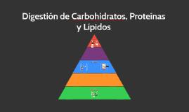 Digestion de Carbohidratos, Proteinas y Lipidos