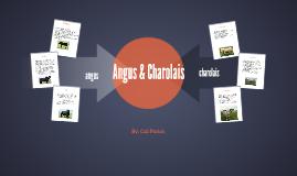 Angus & Charolais