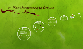 9.1 Plant Structure and Growth