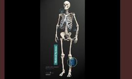 Copy of Copy of Skeletal System