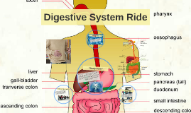 Digestive System Ride