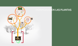 Copy of HORMONAS EN LAS PLANTAS