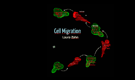 Cell Migration