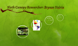 Sloth Canopy Researcher: Bryson Voirin Lesson 2, 3, 4
