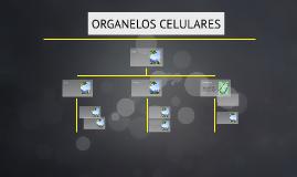Celula eucarionte vegetal