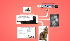 Behavior of Cats