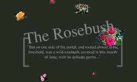 Copy of The Scarlet Letter- The rosebush
