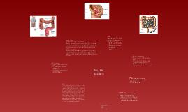 Anatomy; Rectm.