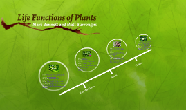 Life Functions of Plants