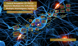 Central Amygdala CEI PCK-δ⁺ Neurons Mediate the Influence of
