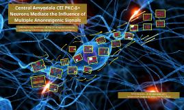 Central Amygdala CEI PCK-δ⁺ Neurons Mediate the Influence of