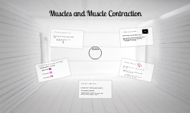 Muscles and Muscle Contraction