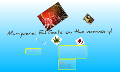Marijuana: The Memory Effects