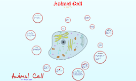 Copy of Animal Cell project
