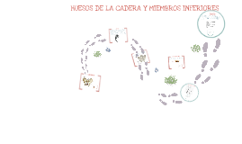 Copy of HUESOS DE LA CADERA Y MIEMBROS INFERIORES