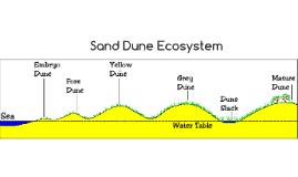 Sand Dune Ecosystem