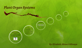 Plant Organ System